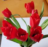 tulipany_kytice